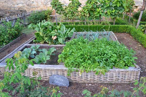 vegetable-garden-890625_960